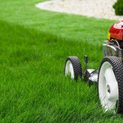Fly Digitally -lawn care